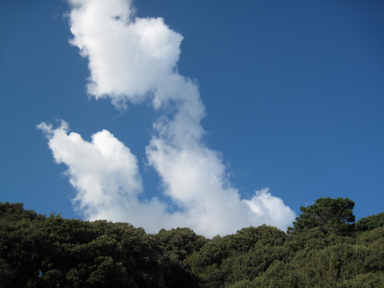 Gerald Shepherd - Emerging Clouds