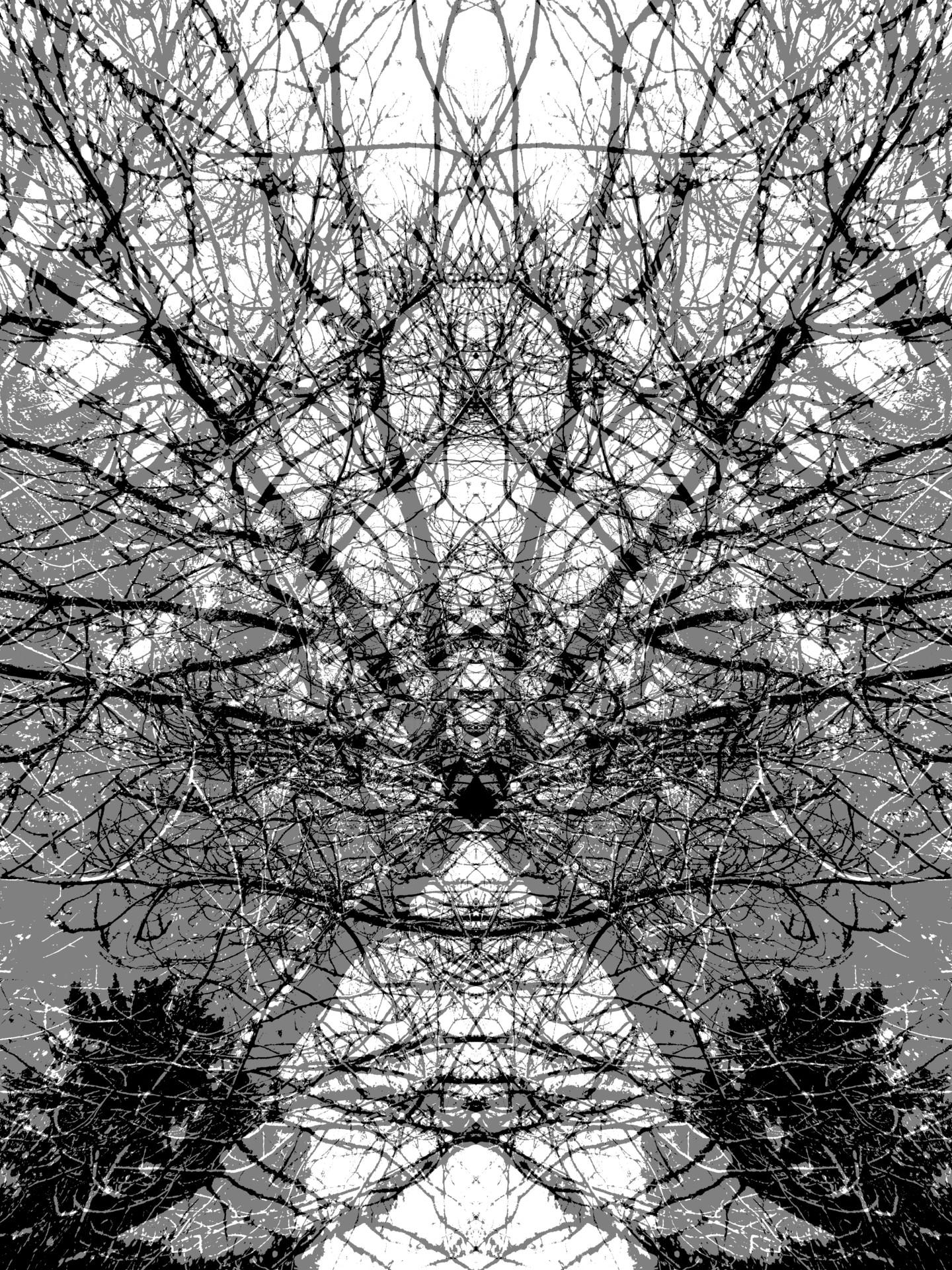 Gerald Shepherd - Diagonals