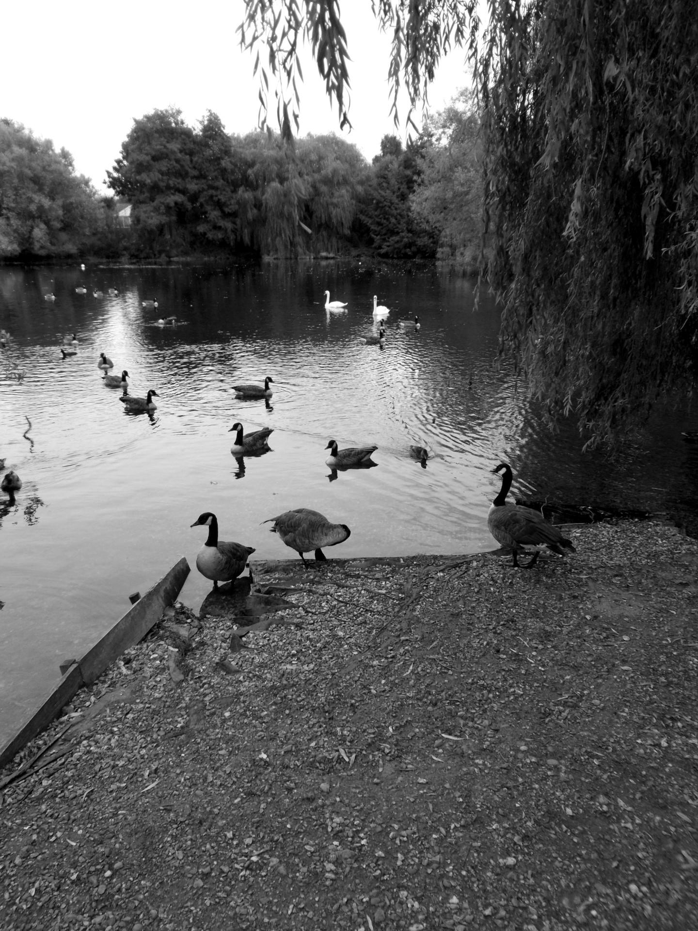 Gerald Shepherd - Composition With Birds