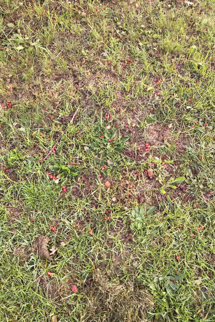 Gerald Shepherd - Autumn Grass