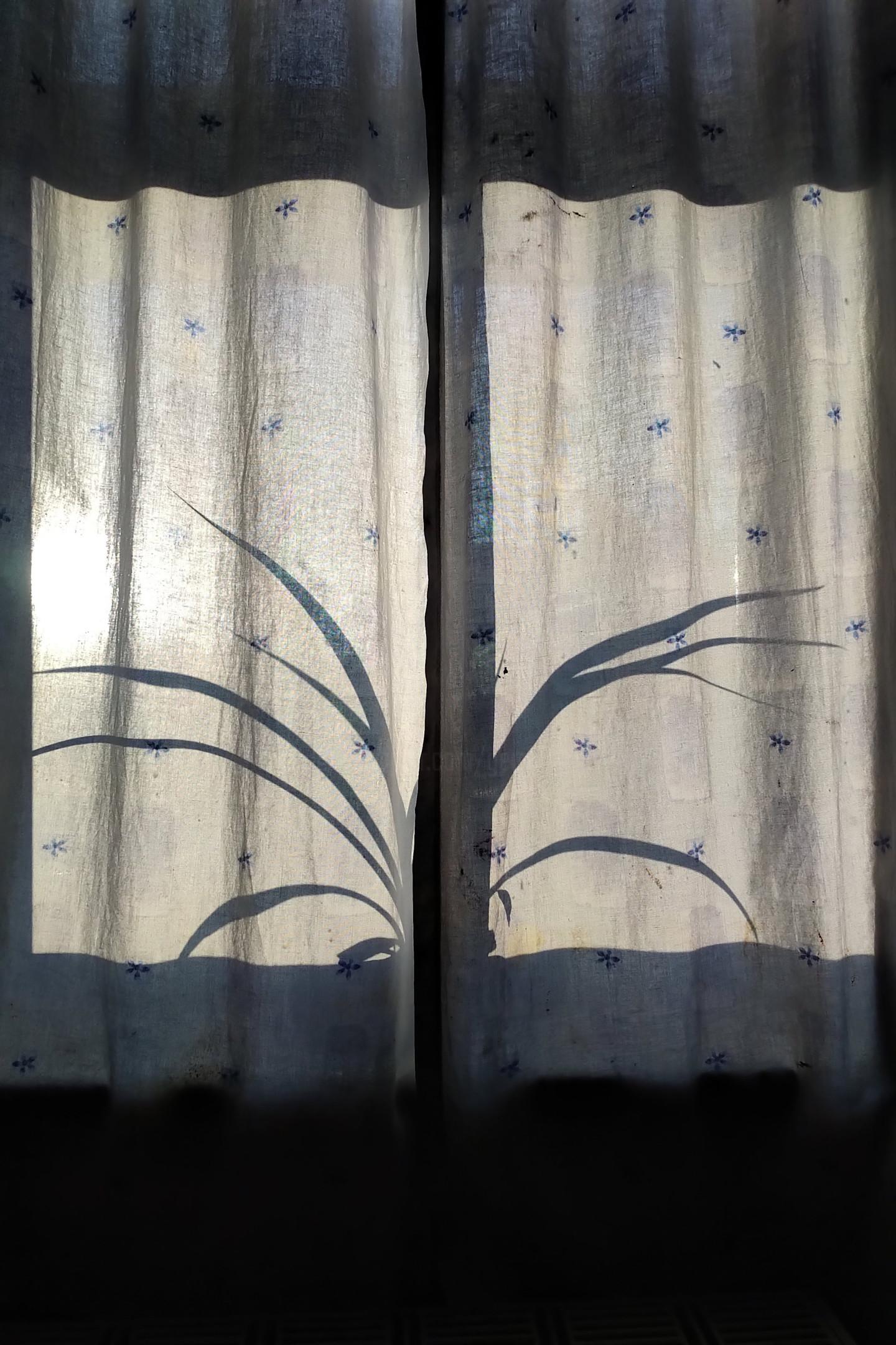 Gerald Shepherd - Spider Plant Silhouette