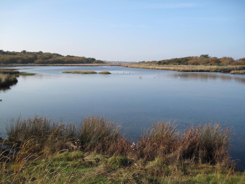 Gerald Shepherd - Nature's Lake