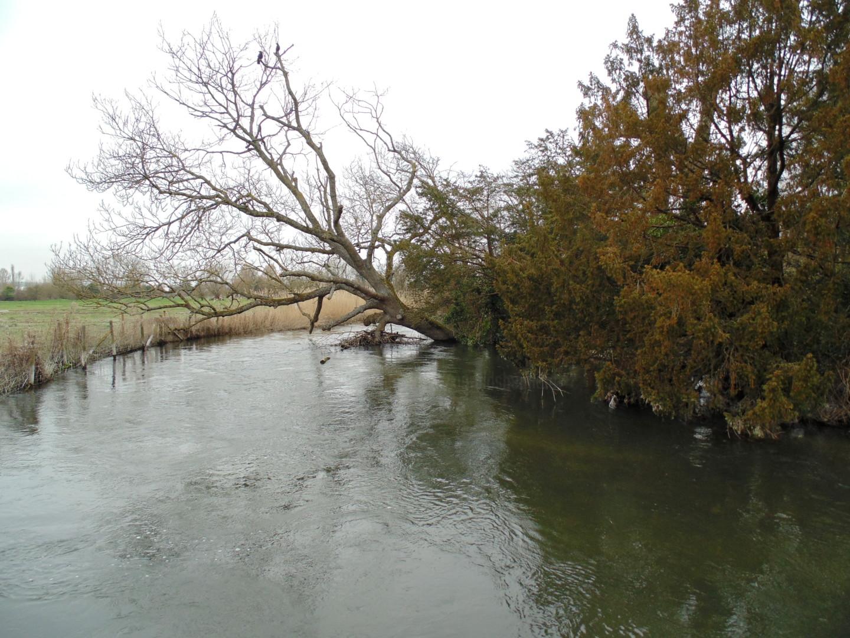 Gerald Shepherd - Fallen Tree On The Avon