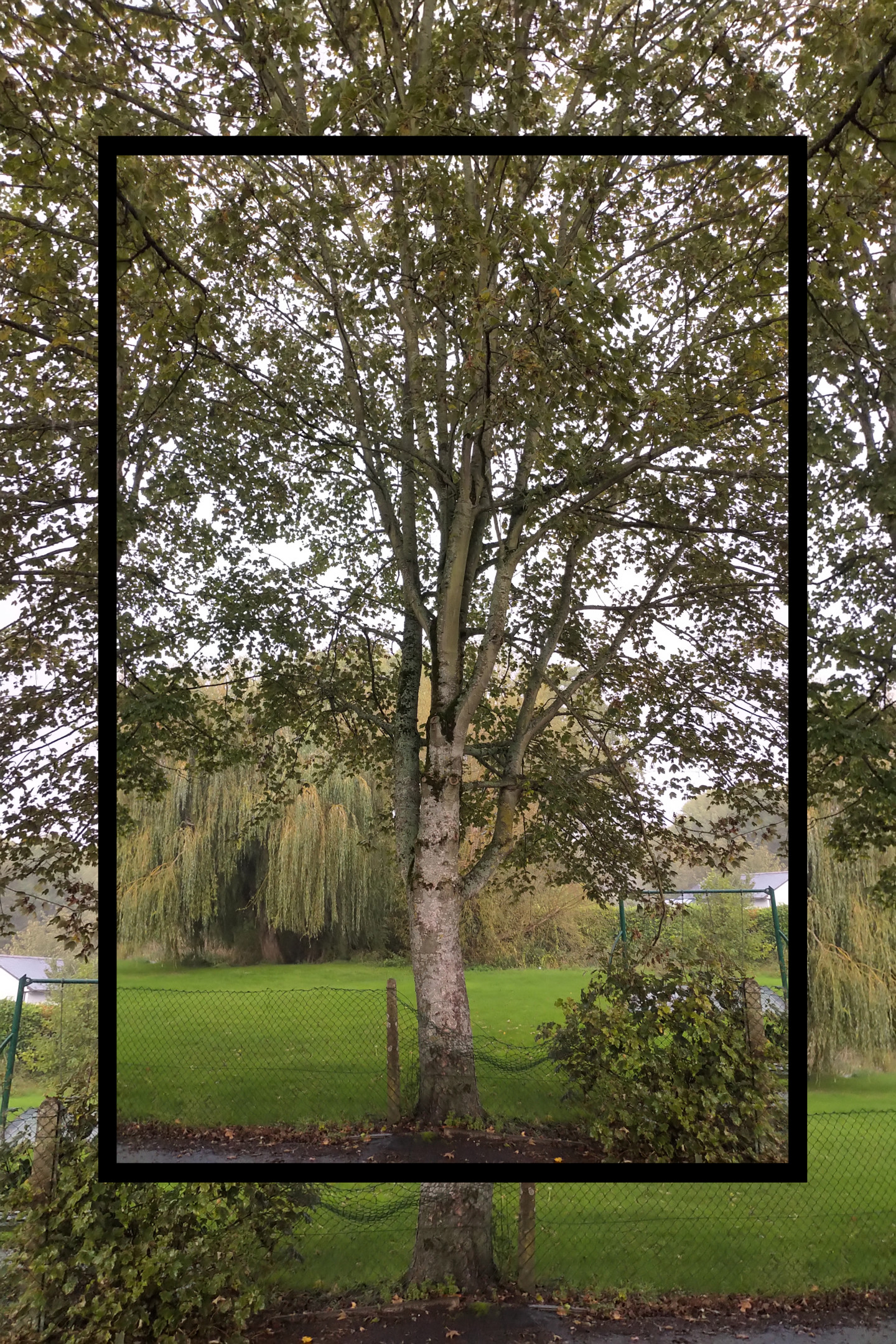 Gerald Shepherd - Tree Before Tree