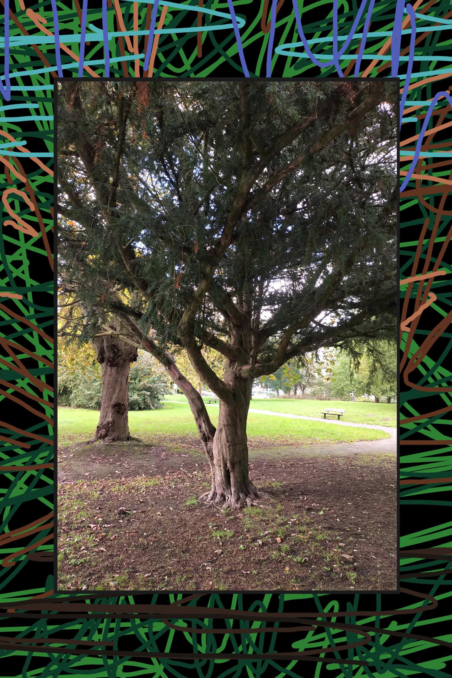 Gerald Shepherd - Tree Scribble