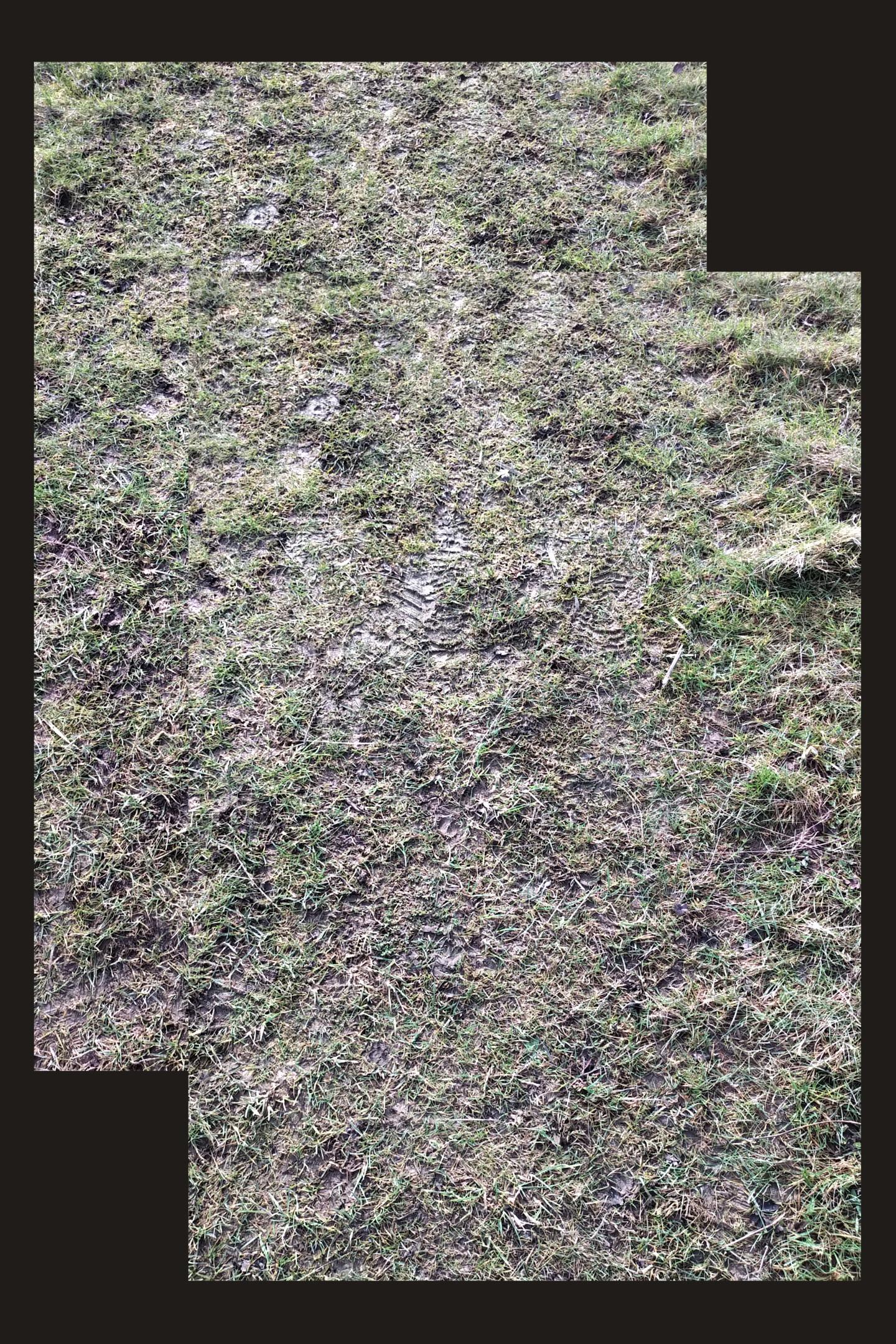 Gerald Shepherd - Footprints In Mud