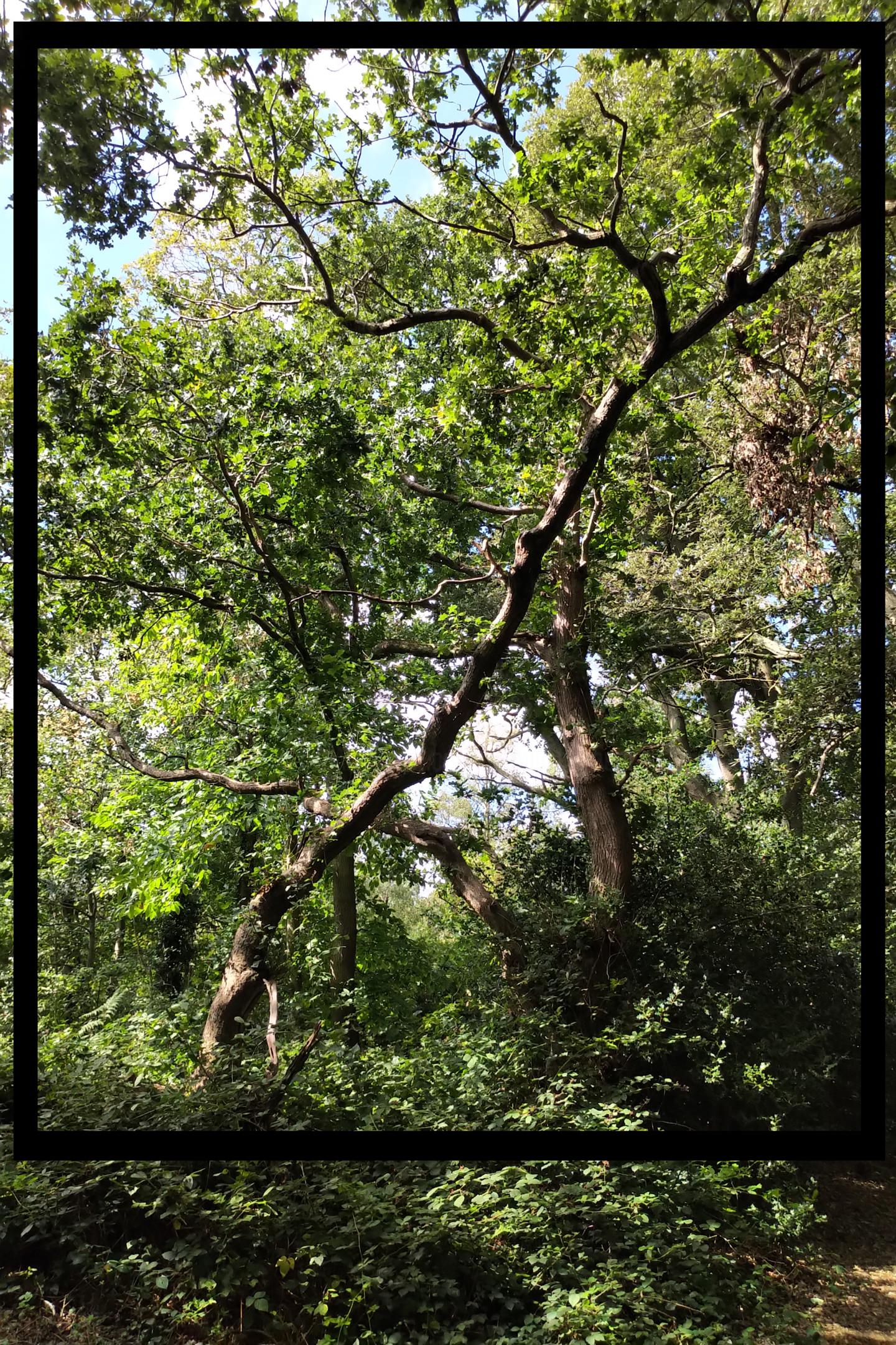 Gerald Shepherd - How Trees Break Up