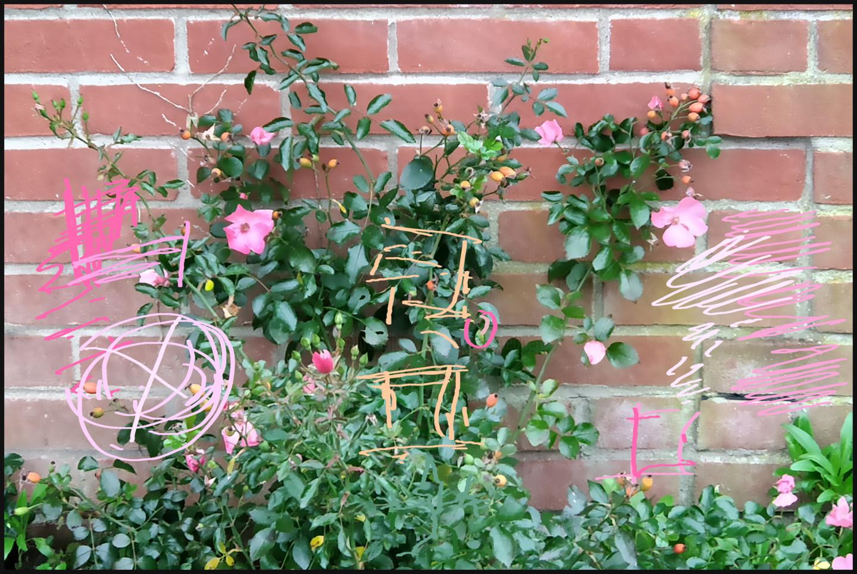 Gerald Shepherd - Rose Wall*