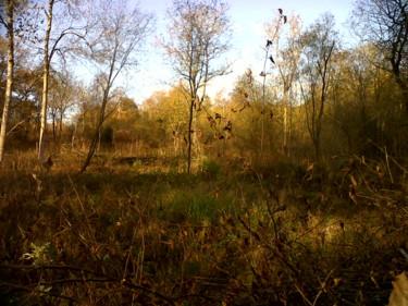 Autumn In Blackmoor Copse