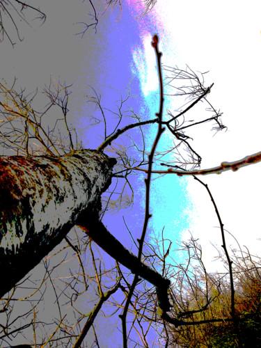 Like A Tree I Look Up
