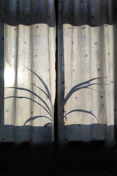 Spider Plant Silhouette
