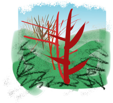 Tree Line Study