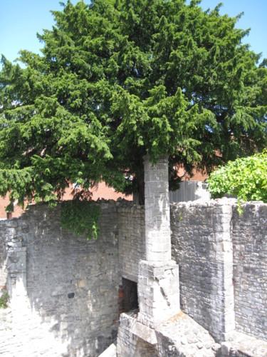 Stone Trunk