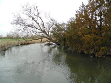 Fallen Tree On The Avon