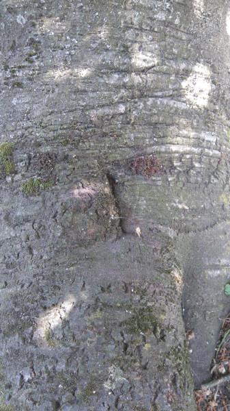 Tree Slit