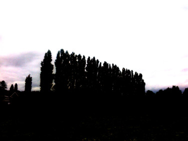 Row Of Poplars