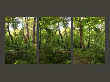 Three Portraits Of A Wood