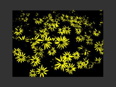 Yellow Daisy Study