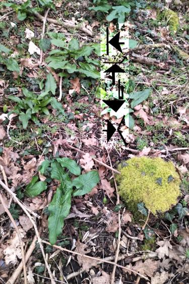Woodland Signs