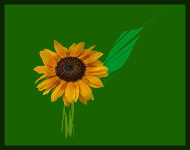 Sunflower In Invisible Vase