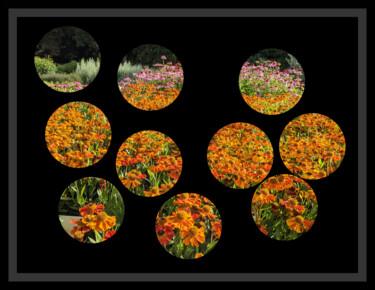 Peephole Flowers 4