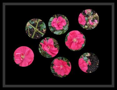 Peephole Flowers 2