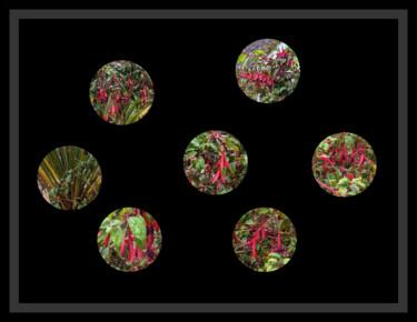 Peephole Flowers 1