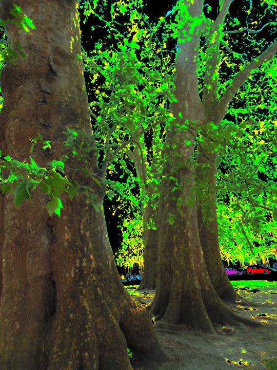 Gerald Edward William Shepherd - Tree Trunks