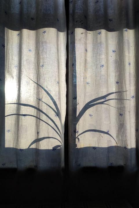 Gerald E. W. Shepherd - Spider Plant Silhouette