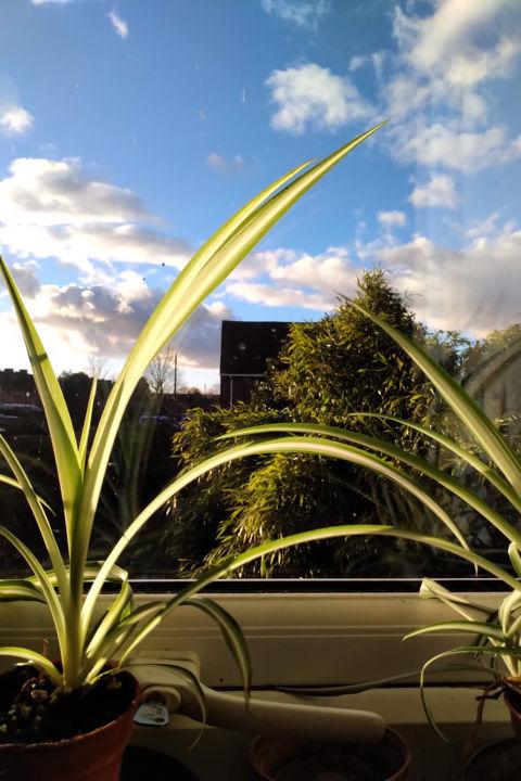 Gerald Shepherd - Summer Window