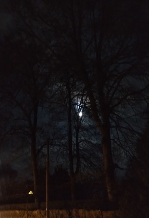 Gerald E. W. Shepherd - Moon Behind Trees