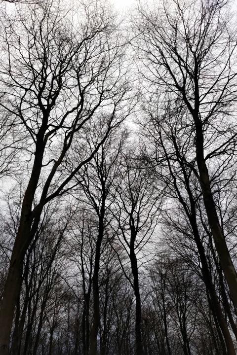 Gerald Shepherd - Scraping The Sky